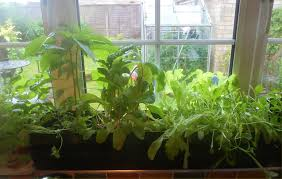window sill planter and where to get affordable ones interior