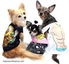 Pauly Halloween Costume Halloween Costume Contest Winner Chihuahua Lady Gaga