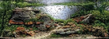 aquarium design exle aquariums colossal
