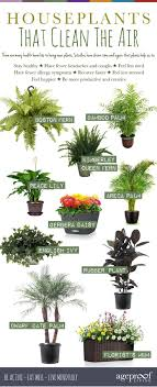 best house plants 10 best houseplants that clean the air help detox your home