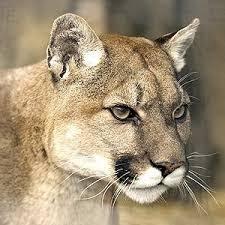 Puma Meme - puma pants meme generator