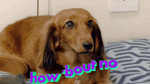 Frowning Meme - frowning dog meme 100 images new frowning dog meme turn that