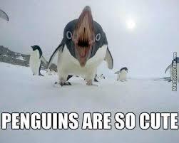 Cute Penguin Meme - cute meme by 1234murphdog memedroid