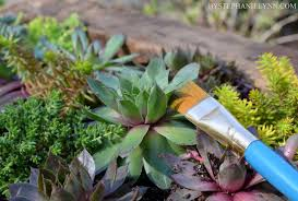 succulent wall planter how to build a vertical garden