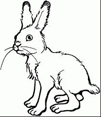 unbelievable jack rabbit coloring rabbit coloring pages
