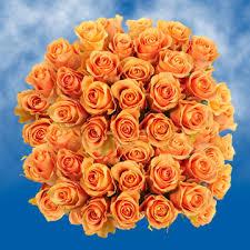 roses wholesale globalrose 100 roses cuenca roses wholesale walmart