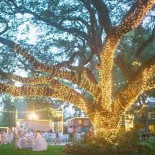 wrap lights on outdoor tree sacharoff decoration