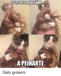 imagenes groseras de gatos yotevoviaensenar a peinarte gato grosero meme on sizzle