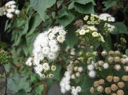 plants native to mexico wildflowers the trees u0026 flowers of whangarei