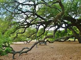 amazing baldwin park with 100 year oak trees explore houston