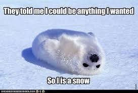 Harp Meme - animal capshunz harp seal funny animal pictures with captions