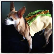 Taco Costume Yoworld Forums U2022 View Topic Andrew The Taco Costume