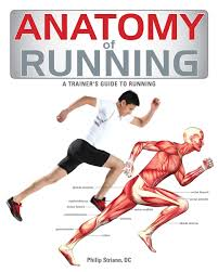 Full Body Muscle Anatomy Anatomy Of Running Follows The Format Of The Successful Anatomy Of