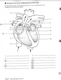 circulation system blank free coloring pages of medical heart