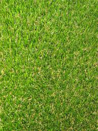 free samples treviso artificial turf pet friendly pet friendly