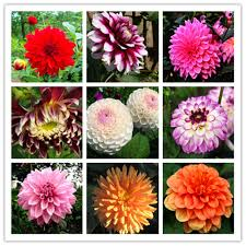 compare prices on tassel flower seeds online shopping buy low