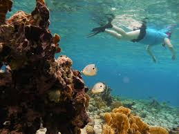 Ohio snorkeling images Private snorkeling aruba oranjestad top tips before you go jpg