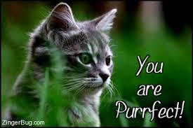 Purrrfect Meme - you are purrfect kitten glitter graphic greeting comment meme or gif