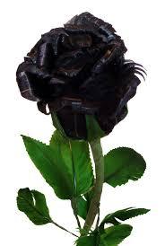 best 25 black rose picture ideas on pinterest black roses