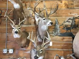 big game mounts travis taxidermy humboldt sd 57035