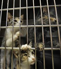 animal hoarding isn u0027t just gross it u0027s a recognized psychiatric