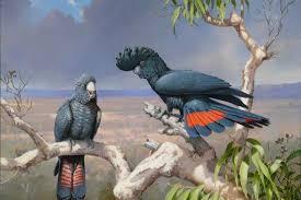 australian nature artist and bird illustrator william t cooper
