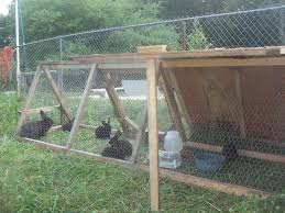 Rabbit Hutch Plans For Meat Rabbits Homr U2013 The Home Meat Rabbit Project New England Grass Fed