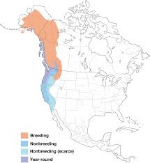 Bluebird Map Varied Thrush Range Map All About Birds Cornell Lab Of Ornithology