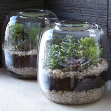 80 best terrariums images on pinterest gardening plants and
