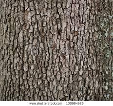 wood tree texture background pattern stock photo 130984586
