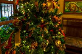 Plant Used As A Christmas Decoration Animal Kingdom Christmas Decorations Holiday Dinoland Dance Party