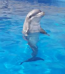 delfines most beautiful animals in the world description from