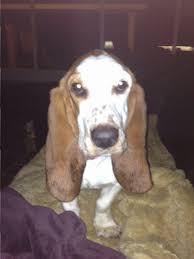 belgian shepherd houston most recent posts blog houston dog training