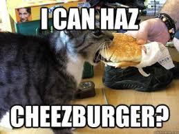 Meme Cheezburger - cool cheezburger cat meme 80 skiparty wallpaper
