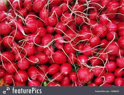 Make A Vegetable Garden by Radish Background