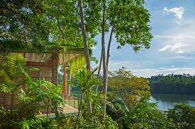 verdant tri lanka resort features a suite of green roofs and