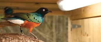 uv light for birds fluorescent bird ls bird lighting