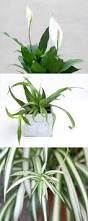decor home decoration ideas with beautiful indoor plants and pot