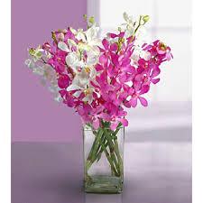 Orchid Flower Arrangements Orchid Flowers Fort Lauderdale And Palm Beach Premier Orchid