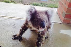 prickly koala album on imgur