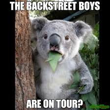 Backstreet Boys Meme - the backstreet boys are on tour meme koala cant believe it