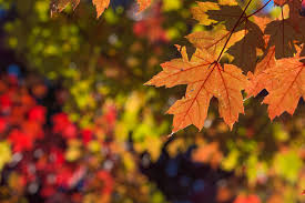 Foliage Map When Will The Leaves Reach Their Peak Color In Michigan Here Are