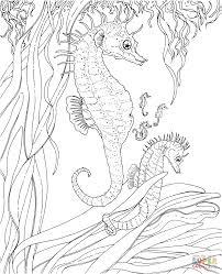 leafy sea dragon 1 by clvmoore sea dragon coloring pages