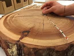 tree ring lab chair of forest ecology eth zurich