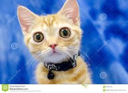 big eyed kitty cat seymore beanie boo stock photo image 83226164