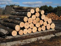 canada logs canada logs manufacturers and suppliers on alibaba