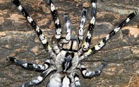 pauls reptile den for all your reptile needs spiders scorpions