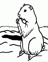 groundhog woodchuck coloring pages clip art library