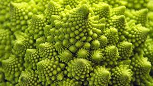 fractal pattern in nature jayneyer com what a weekend in the brazilian rainforest taught me