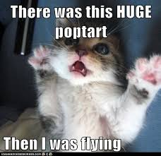 Flying Cat Meme - there was this huge poptart then i was flying lolcats lol cat